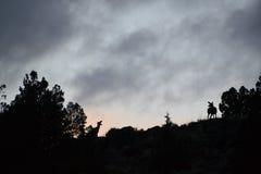 Zonsondergang en onweer met hertenschaduwen Royalty-vrije Stock Foto
