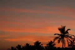 Zonsondergang en palm Stock Fotografie