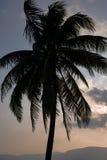 Zonsondergang en palm Stock Foto's
