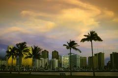 Zonsondergang en palmen Stock Afbeeldingen