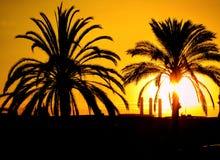 Zonsondergang en palmen Royalty-vrije Stock Afbeelding