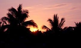 Zonsondergang en palmen Stock Fotografie