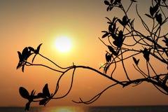 Zonsondergang en schaduw Stock Foto's