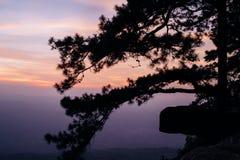 Zonsondergang en Silhouet van pijnboomboom Royalty-vrije Stock Afbeeldingen