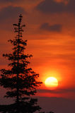 Zonsondergang en spar Stock Foto