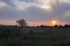 Zonsondergang en sunrises De purpere violette hemel en veel betrekken Silhouet van eenzame boom in de donkere weide op de achterg Stock Afbeelding