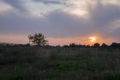 Zonsondergang en sunrises De purpere violette hemel en veel betrekken Silhouet van eenzame boom in de donkere weide op de achterg Royalty-vrije Stock Fotografie
