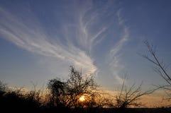 Zonsondergang en sunrises Silhouetboom in de donkere weide op Royalty-vrije Stock Fotografie