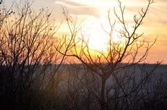 Zonsondergang en sunrises Silhouetboom in de donkere weide op Stock Foto
