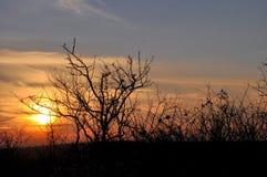 Zonsondergang en sunrises Silhouetboom in de donkere weide op Stock Fotografie