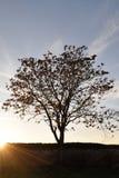 Zonsondergang en sunrises Silhouetboom in de donkere weide op Royalty-vrije Stock Afbeelding