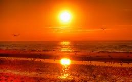Zonsondergang en vogels Stock Foto