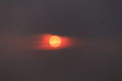 Zonsondergang en vogels Royalty-vrije Stock Foto's