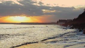 Zonsondergang en Zeemeeuwen stock videobeelden