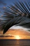 Zonsondergang frame door palm, Maui. Stock Afbeeldingen