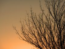 Zonsondergang in havenboomgaard Washington Royalty-vrije Stock Fotografie
