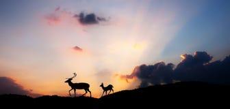 Zonsondergang HDR Stock Foto