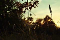 Zonsondergang in het bos Stock Afbeeldingen