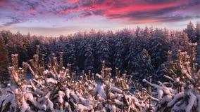 Zonsondergang in het bos Stock Foto