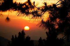 Zonsondergang in het bos Royalty-vrije Stock Afbeelding