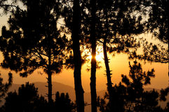 Zonsondergang in het bos Royalty-vrije Stock Foto