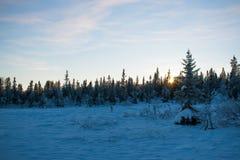 Zonsondergang in het bos, december royalty-vrije stock foto