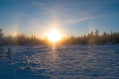 Zonsondergang in het bos, december met sneeuw in de lucht stock afbeeldingen