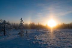 Zonsondergang in het bos, december met sneeuw in de lucht royalty-vrije stock fotografie