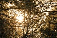 Zonsondergang in het bos, Ozark Mountains, MO Royalty-vrije Stock Foto's