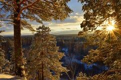 Zonsondergang in het bos van de de winterpijnboom Oostelijk Siberië stock afbeelding