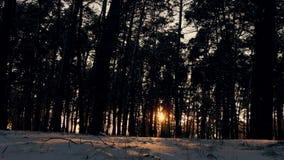 Zonsondergang in het bos van de winter ijzige Kerstmis stock footage