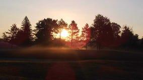 Zonsondergang het de pijnbomen stock foto