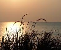 Zonsondergang, het gebied van de grasbloem in aard met zonsondergangachtergrond Stock Afbeelding