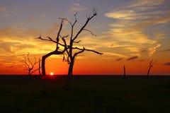 Zonsondergang in het Moeras van Louisiane Royalty-vrije Stock Foto