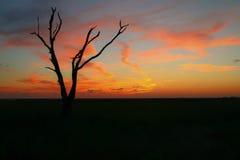 Zonsondergang in het Moeras van Louisiane Stock Afbeeldingen