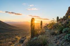 Zonsondergang in het Nationale het Parkwesten van Saguaro stock fotografie