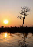 Zonsondergang in het Nationale Park van Chobe, Botswana, Afrika Royalty-vrije Stock Foto