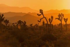 Zonsondergang in het Nationale Park van de Boom Joshua Royalty-vrije Stock Foto