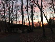 Zonsondergang in het park Stock Afbeelding