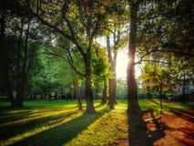 Zonsondergang in het park stock fotografie