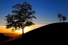 Zonsondergang in het park stock afbeeldingen