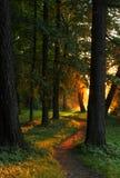 Zonsondergang in het park Royalty-vrije Stock Afbeeldingen
