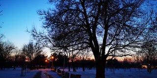 Zonsondergang in het park stock foto's