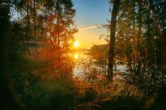 Zonsondergang in het pijnboombos royalty-vrije stock foto