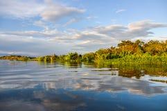 Zonsondergang in het Regenwoud van Amazonië, Manaos, Brazilië Stock Afbeeldingen
