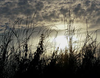 Zonsondergang hoog gras Stock Fotografie