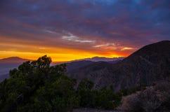Zonsondergang Joshua Tree National Park Stock Afbeelding