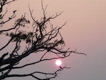 Zonsondergang in Kerala Royalty-vrije Stock Afbeelding