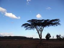 Zonsondergang in kericho, Kenia stock afbeelding