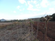 Zonsondergang in kericho, Kenia royalty-vrije stock foto's